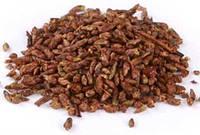 Береза почки лекарственные семена