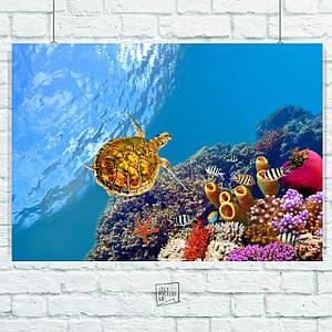 Постер Подводный мир, рыбы, коралловый риф, природа. Размер 60x42см (A2). Глянцевая бумага