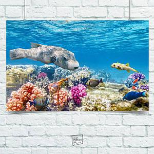 Постер Подводный мир, рыбы, коралловый риф, природа. Размер 60x40см (A2). Глянцевая бумага