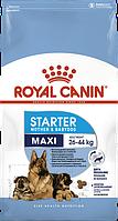 Royal Canin Maxi Starter 4кг - корм для щенков до 2 месяцев, беременных и кормящих сук крупных пород