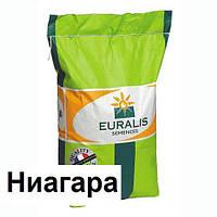 Гибрид подсолнечника Евралис ЕС Ниагара (Euralis)