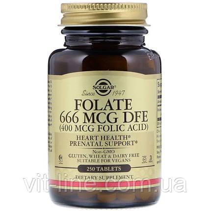 Solgar, Фолиевая кислота, 400 мкг, 250 таблеток (Фолат, 666 мкг DFE), фото 2