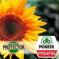 Семена подсолнечника Pioneer PR64F66 Кру