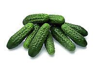 Огурец-корнишон Престо F1 (Presto RZ), 1000 семян