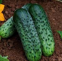 Огурец-корнишон Каракое F1 ( Karaoke RZ), 1000 семян