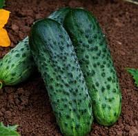 Огурец-корнишон Каракое F1 ( Karaoke RZ), 250 семян