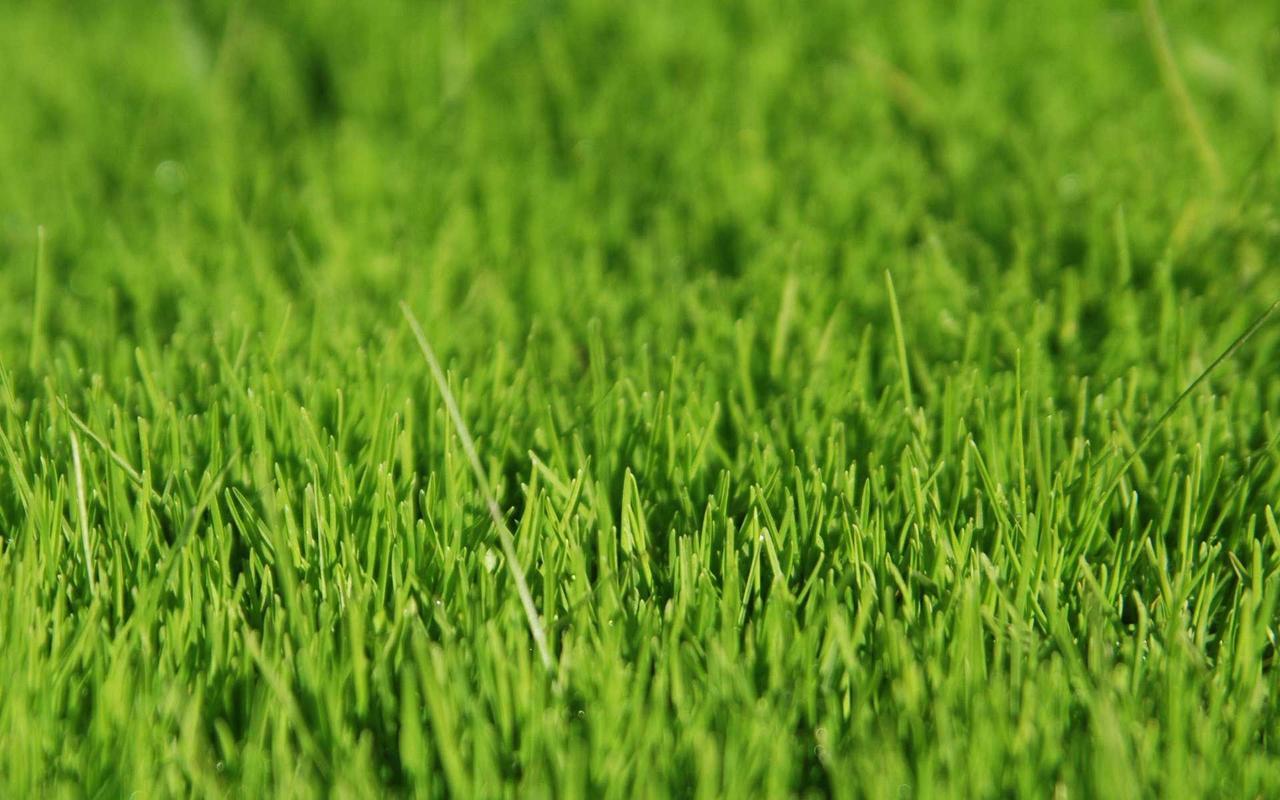Семена травы газонной 0,5 кг сорт Жара (жаростойкая) ТМ Агролиния