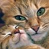 Алмазная вышивка Кошка с котятами 30 х 30 см (арт. FS813) на подарок