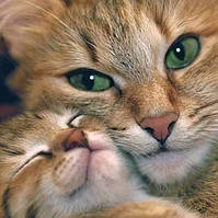 Алмазная вышивка Кошка с котятами 30 х 30 см (арт. FS813) на подарок, фото 1