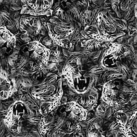 "Пленка аквапринт  для аквапечати ""Ягуар"" LRD265B, Харьков (ширина 50см)"
