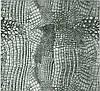 Пленка аквапринт аквапечать шкура змеи LA070B, Харьков (ширина 50см)