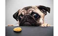 Витамины и лакомства для собак