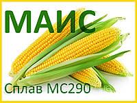 Семена кукурузы Сплав МС 290, ФАО 290 (МАИС) 2018 год урожая