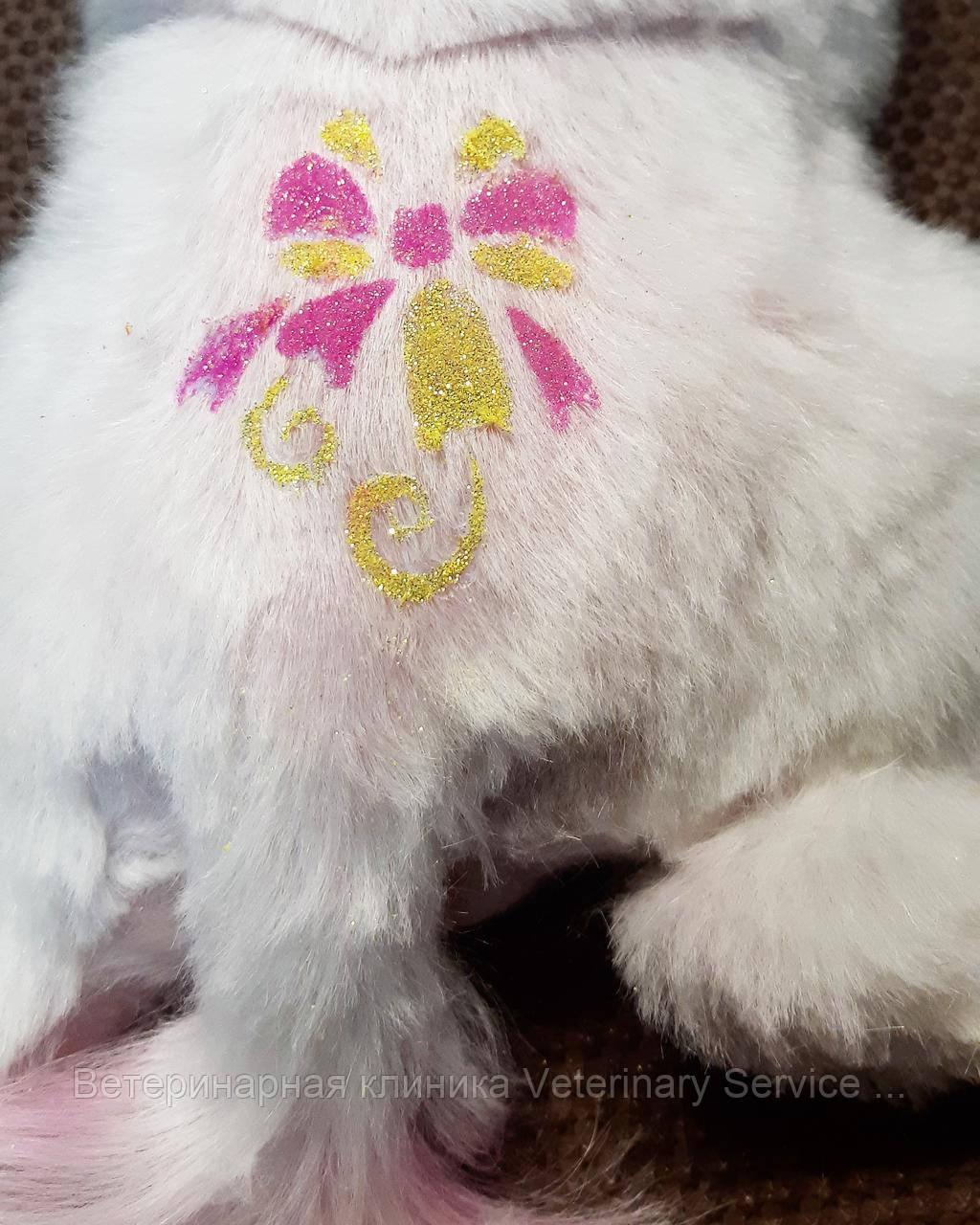 Дизайн на шерсти животного (Покраска шерсти)