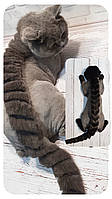 Гигиеническая стрижка кошек