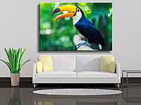 de9bdae10ee69 Экзотические птицы оптом в Украине. Сравнить цены, купить ...
