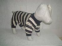 Комбинезон для собаки вязаный трикотаж
