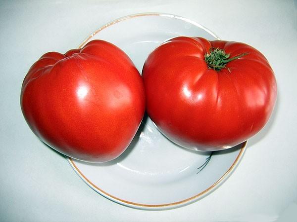 Выращивание овощей в теплице Л. В. Назаринов