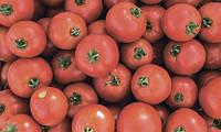 Семена томата Мамако F1, 2500 семян