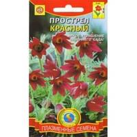 Семена Сон трава (Прострел обыкновенный) Красный 10 семян Плазменные семена