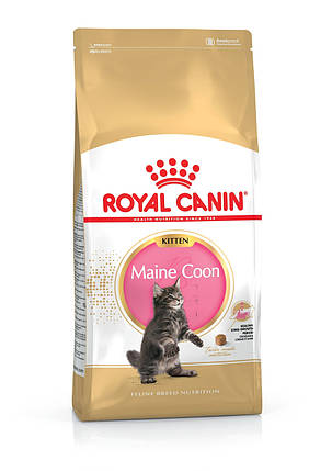 Royal Canin (Роял Канин) MaineCoon Kitten для котят породы мейн кун, 2 кг, фото 2