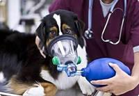 Оксигенотерапия для животных (10 часов)
