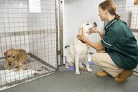 Содержание животных в стационарном отделении: собака (30-35 кг)
