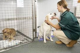 Содержание животных в стационарном отделении: собака (50-60 кг)