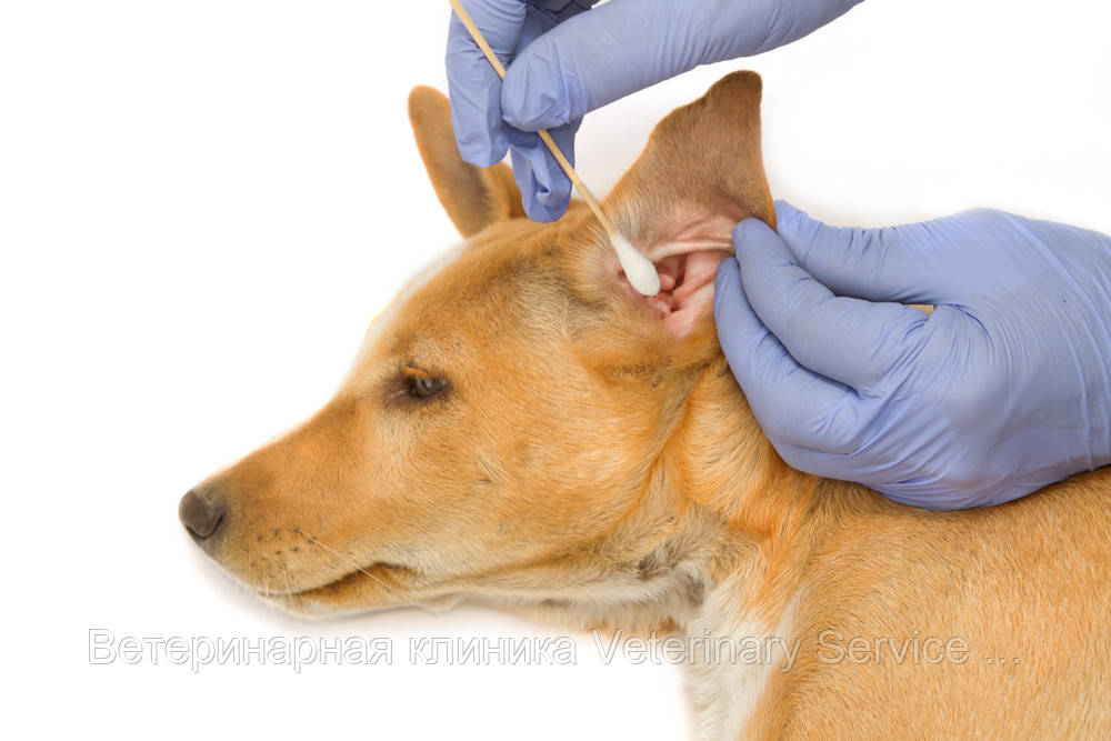Чистка ушных раковин (слухового прохода) ІІІ степ.сложности