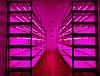 Світлодіодна фитолента линзованная SL-010FLens 2835/120LED 220V IP65 (1m) Код.59400, фото 2