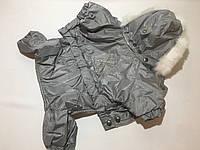 Комбинезон для собак Сильвер серый Мопс
