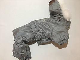 Комбінезон Сільвер 28 см розм Мопс сірий для собак
