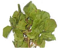Грушанка круглолистная, трава грушанки 100 грамм