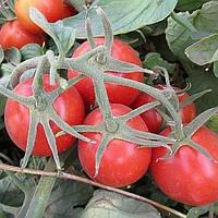 2206 F1 – томат детерминантный, 5000 сем  Lark Seeds Ларк сидс