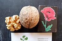 """Семена грецкий орех сорт """"Кочерженко""""(10 штук калибр 30-40 мм)  саженцы, насіння волоський горіх на саджанці, фото 1"""