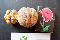 """Семена грецкий орех сорт """"Идеал"""" (10 штук калибр 30-40 мм) на саженцы, насіння волоський горіх на саджанці, фото 1"""