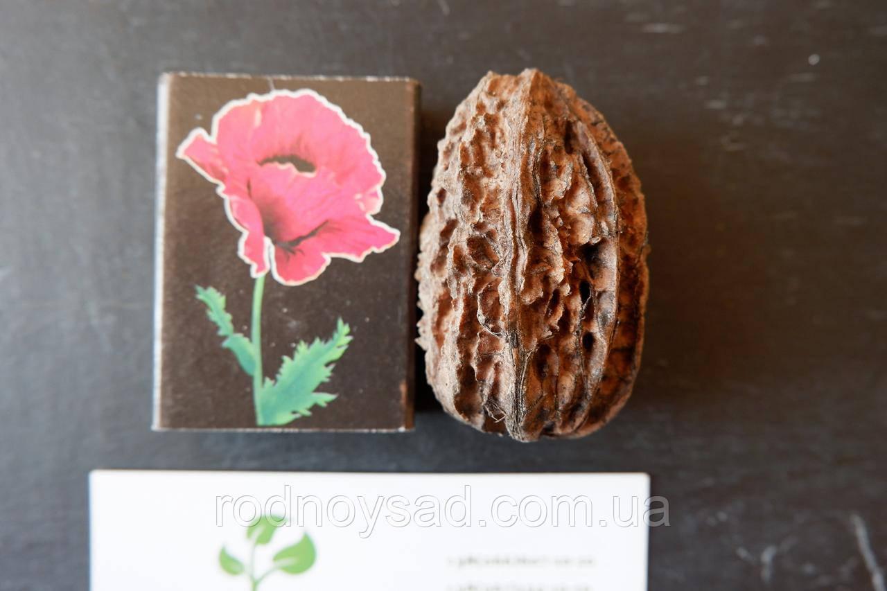 Орех серый семена (10 штук) для саженцев, Júglans cinérea горіх сірий насіння (родственник грецкого)