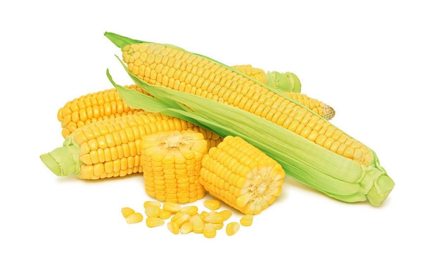 Насіння кукурудзи Євраліс Семенс ЄС Кроссман ФАО 240