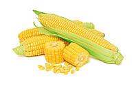 Семена кукурузы Евралис Семенс ЕС КРОССМАН  ФАО 240