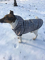 Жилет Шанс разм №3 серый для собак