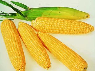 Семена кукурузы Топмен