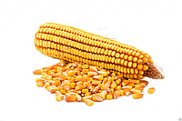 Семена кукурузы СИ Телиас