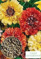 На развес Хризантема 'Махровая смесь Дунетти' ТМ 'Весна' цена за 1г