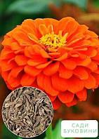 На развес Циния гиацинтоцветковая 'Оранжевая' ТМ 'Весна' цена за 4г, фото 1