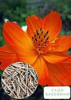 На развес Космея 'Оранжевая махровая' ТМ 'Весна' цена за 3г, фото 1
