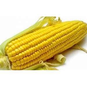 Семена кукурузы НК Пако