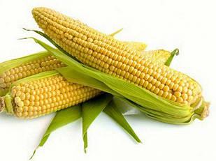 Семена кукурузы НК Канзас