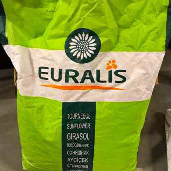 Семена подсолнечника ЕС Каприз СЛП (Евролайтинг)