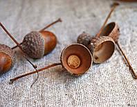 """Шляпки желудей """"с деткой"""" дуба обычного (материал для рукоделия, упаковка 10 штук), фото 1"""