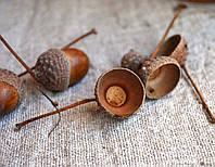 """Шляпки """"с деткой"""" желудей дуба обычного  (материал для рукоделия, упаковка 30 штук), фото 1"""